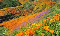 Indahnya Bunga Liar Bikin Pengunjung Mengular Ingin Berfoto