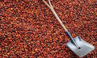 Indonesia Mau Bawa Masalah Sawit ke WTO
