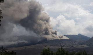 30 Pohon Akasia Tumbang akibat Terdampak Abu Vulkanis Gunung Bromo