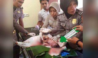 Bayi Dibuang, Penemuan Bayi Brebes, Bayi Baru Lahir