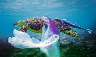 kantong plastik, korsel, supermarket,
