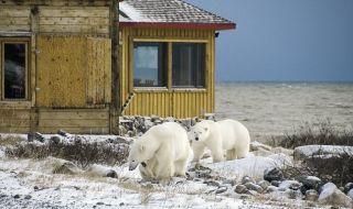 beruang kutub, es lau mencair, kutub utara, perubahan iklim,