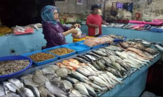Harga Ikan Laut