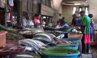 Pasokan Ikan Laut Langka