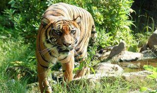 Deforestasi Hutan Harapan Mengancam Habitat Harimau dan Gajah