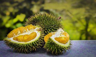 demam durian, durian, hutan, malaysia,