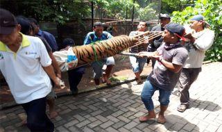 Harimau Lepas