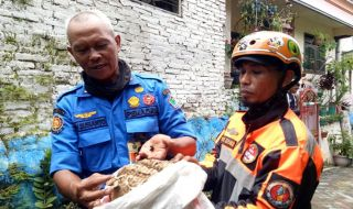 Empat Bulan Bertengger di Atap, Sarang Tawon Ndas Dievakuasi PMK