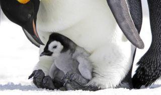 penguin, es, perubahan iklim, pemanasan global,