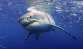 serangan hiu, hiu, australia,