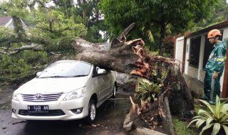 Hujan Badai Terjang Malang, Belasan Pohon Tumbang, Dua Orang Terluka