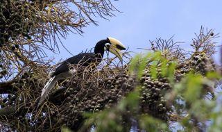 Hutan Malang Selatan Beralih Fungsi, Perjumpaan Burung Rangkong Turun