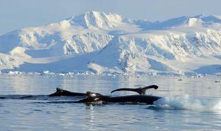 paus bungkuk, perubahan iklim, penguin, pemanasan global,
