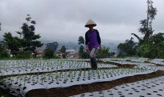 Impor Bawang Putih Bulog Disorot, Pemerintah Diminta Dicabut