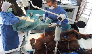 Jalani Operasi Tulang, Kondisi Kesehatan Hope Membaik