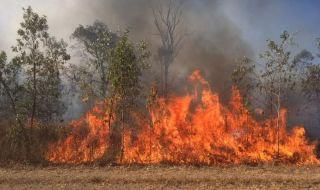 kebakaran hutan, kebakaran, queensland,