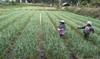 Kementan Jawab Tudingan Asosiasi Hortikultura Nasional: Cek Lapangan!