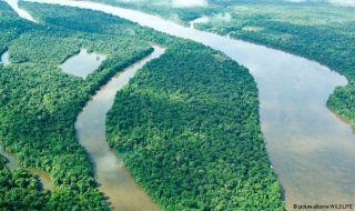 tropis, keanekaragaman hayati, hutan,
