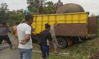 Lahan Diserobot Warga, Delapan Gajah Sumatera Dievakuasi