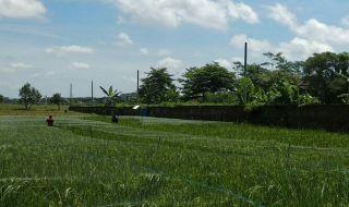 Lahan Pertanian di Kota Malang Semakin Berkurang
