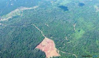 Hutan Gundul
