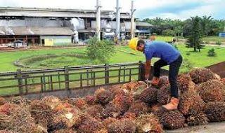 PTPN V Asup TBS Milik Petani Kembangkan Energi Baru Terbarukan