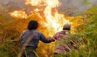 Kebakaran Gunung Sindoro