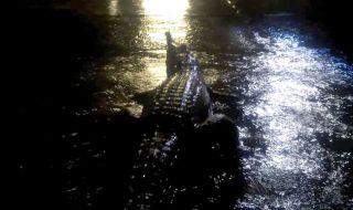 banjir, australia, banjir bandang, ular, buaya,