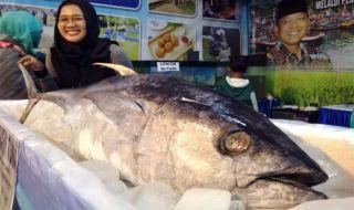 Ikan Tuna Yellow Fin