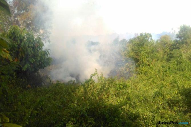 50 Hektare Hutan Lindung di Kaki Gunung Seulawah Terbakar
