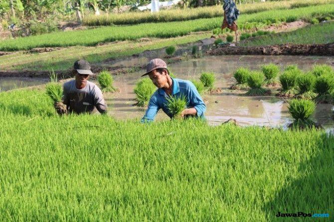 Atasi Masalah Pangan Lewat Reformasi Agraria