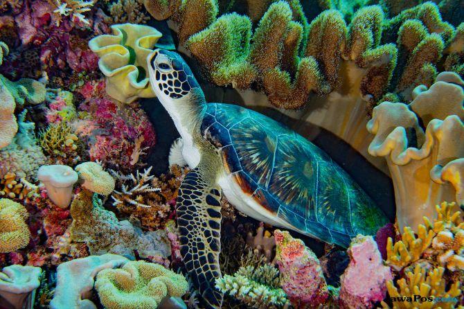 terumbu karang, koral, laut,
