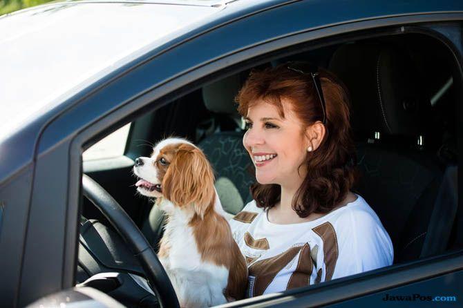 Bawa Anjing Sambil Nyetir, di Amerika Ilegal dan Bakal Kena Sanksi