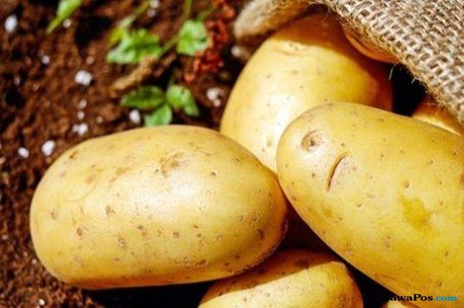 tips diet, manfaat kentang,