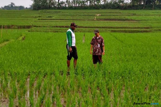 Berdayakan Pertanian Indonesia Latih 11 Perwakilan Negara Afrika