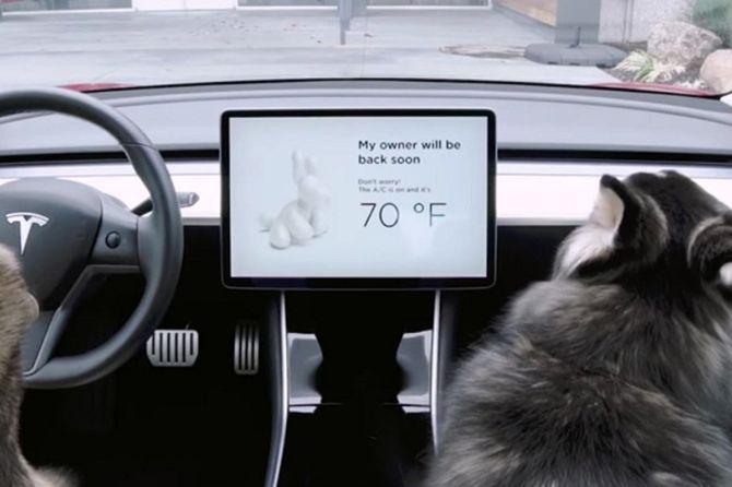 Cegah Anjing Rewel Dalam Mobil, Tesla Luncurkan Fitur Khusus