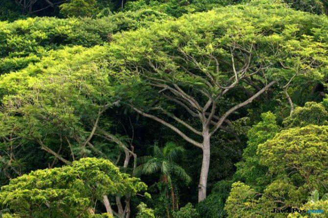 Filantrop Dunia Sumbang Rp 6 Trilyun Buat Lindungi Hutan, hutan,