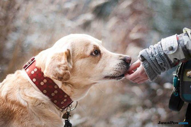 Garap Penghoby Binatang, ASM Luncurkan Produk Simas Pet Insurance