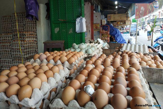 Harga Telur Ayam