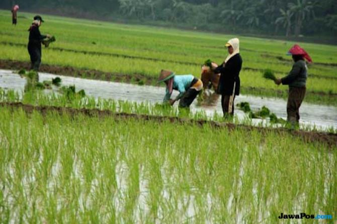 HKTI Dorong Modernisasi Untuk Kesejahteraan Petani