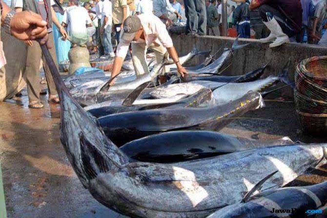Ikan Perairan Sulut dan Maluku Tembus Pasar Ekspor Korea Selatan
