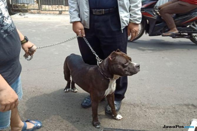 Ini Nasib Anjing Pitbull yang Serang dan Gigit Satpam