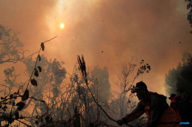 Kawasan TNGC Kembali Terbakar, 144 Hektare Hangus Dilalap Api