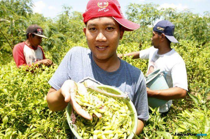 Makin Optimis, Generasi Milenial Banyak Melirik Profesi Petani