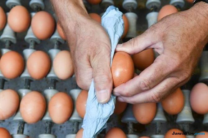 telur, ekspor telur, malaysia,