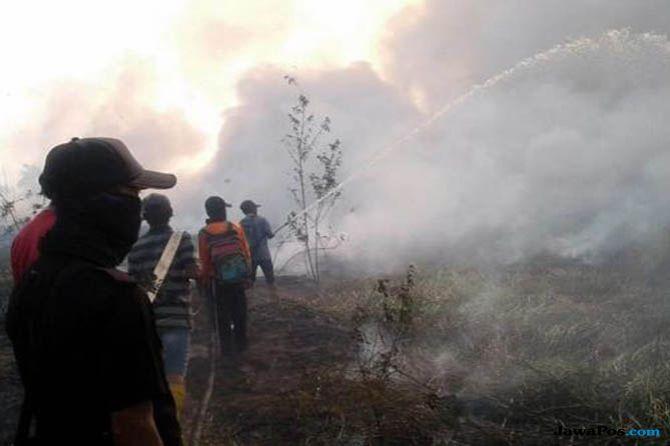 Mengaku Cuma Bakar Sarang Tawon, Polisi Tangkap Pembakar Lahan