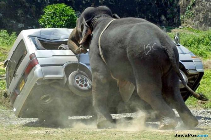 Ngeri, Gajah Ngamuk Serang Bus Wisata