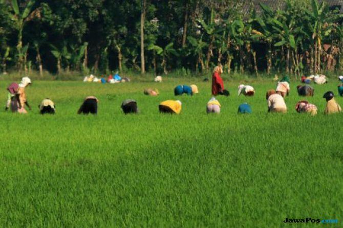 Oktober 2018, Upah Buruh Pertanian dan Informal Perkotaan Naik