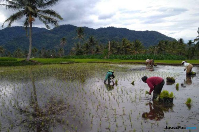 Percepat Tanam, Petani Solok Selatan Butuh 400 Mesin Bajak Sawah