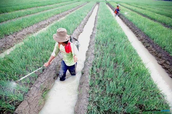 Pertanian Indonesia Masuk Peringkat 25 Besar Dunia